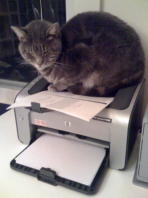 Printer Tiger