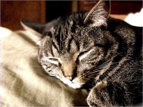 Slumber.