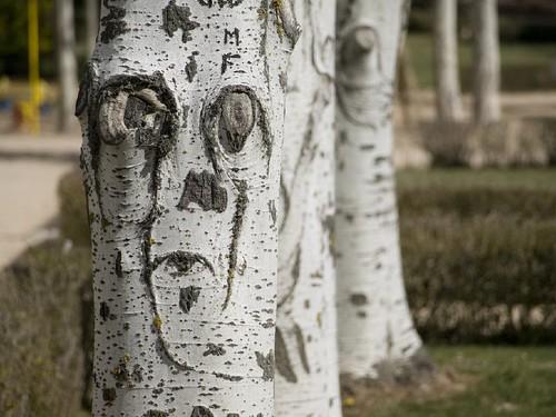 El tronco me mira