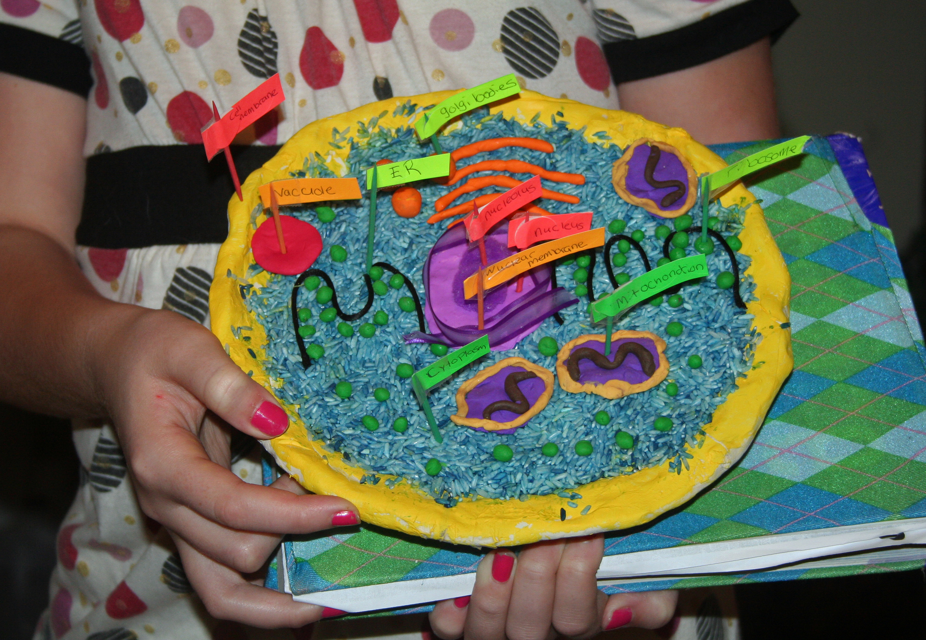 Animal Cell Model Diagram Project Parts Structure Labeled Coloring Simple Plant For Kids And Organelles Cake