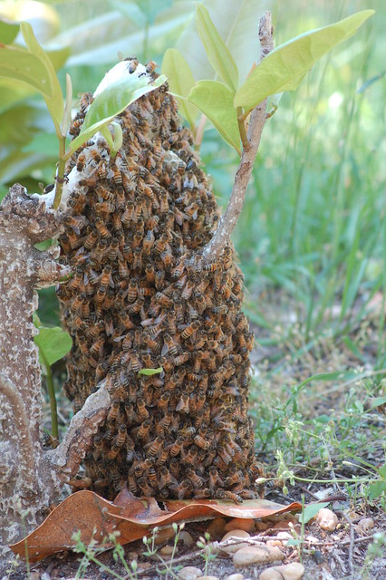 Wild Bee Hive Flickr Photo Sharing