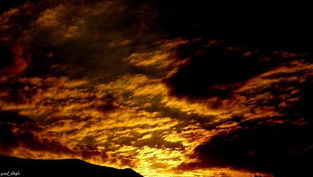 The Gold Light ©
