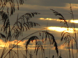 Beach Grass & Sunset