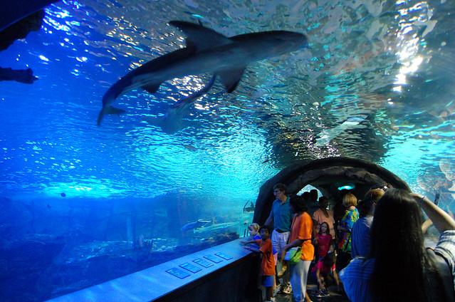 Newport Aquarium Shark Tunnel Flickr Photo Sharing