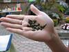 Little lizard in hand