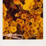 fkr-2008.12.30_600film_04
