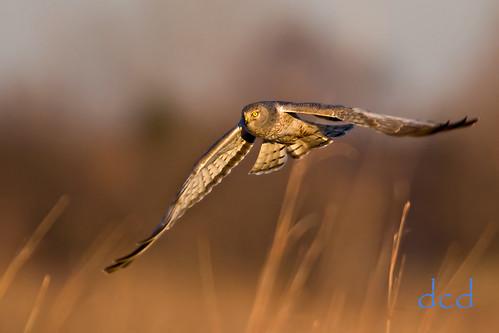 nature birds illinois dupage naperville naturesfinest dupagecountyforestpreserve springbrookprairie thewonderfulworldofbirds