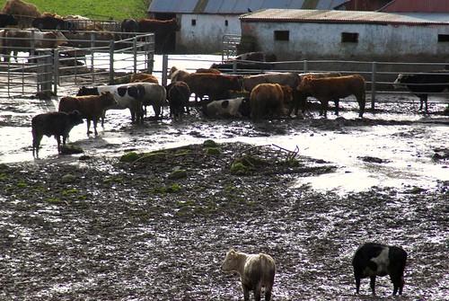 Irish farming 2008