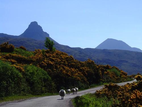 Road from Achiltibuie