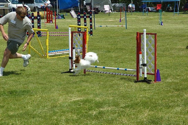 how to make a dog agility course