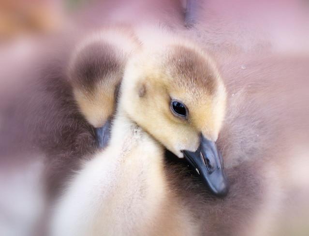 softness !!