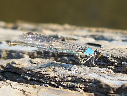 dragonfly good.jpg