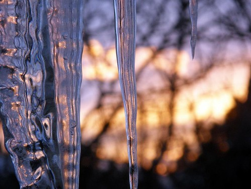 trees winter sun cold ice water sunrise three colorful icicle melt