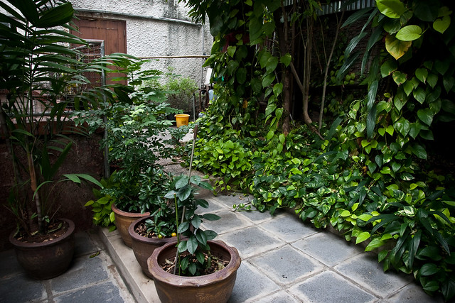 Planting trees around the house : Plants around the house flickr photo sharing