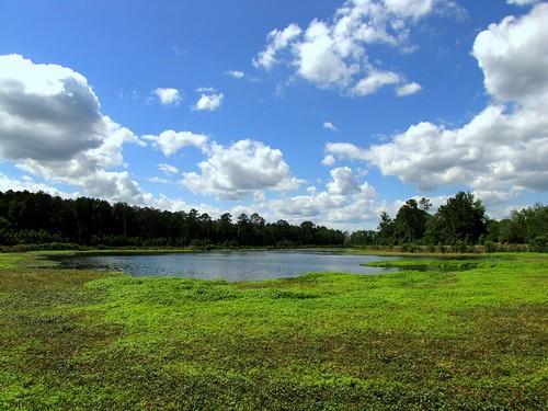 georgia augustaga phinizyswamp phinizyswampnaturepark canonpowershotsx20is