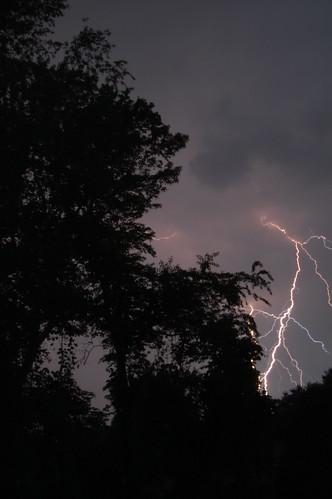 tree landscape lightning
