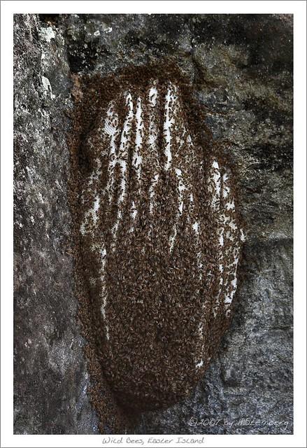 Easter Island Bee Hive