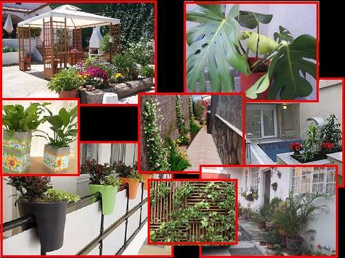 Jardineria mexicana terrazas corredores y balcones for Jardines en terrazas y balcones
