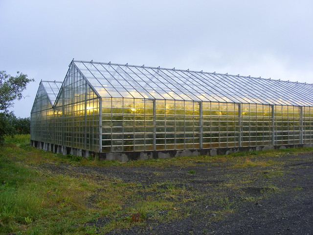 greenhouse with tomatoes tomaten im gew chshaus flickr photo sharing. Black Bedroom Furniture Sets. Home Design Ideas