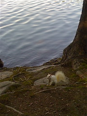 Elusive RARE White Squirrel Spotted at Jamaica Pond