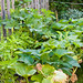 Squash overrunning everything