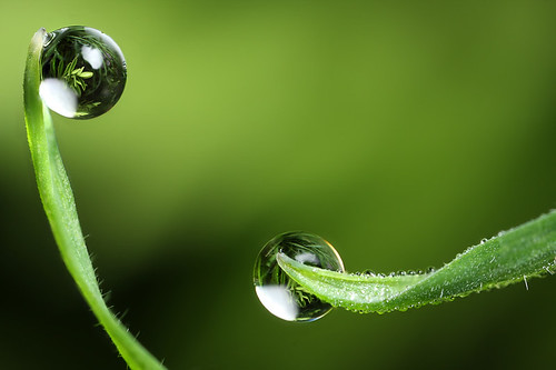Have you washed recently ? dewdrop refraction