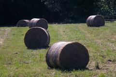 fenaison / hay - Photo of Félines