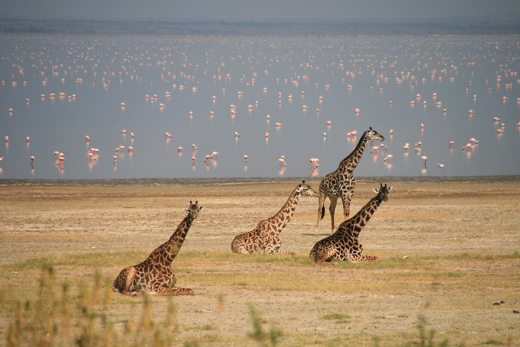 10 Best Places to Visit in Tanzania (with Photos & Map ...  Tanzania Famous Places