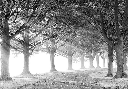 Black and White Avenue