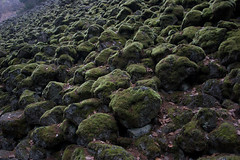 Moss covered talus