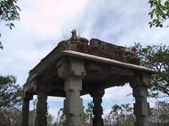 Mysore 11