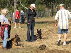 Easy Methods To Help Train Your Dog 2