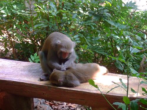 猴子抓虱子 wzong0