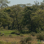 Can You Spot the Rhinoceros? Ngorongoro Crater, Tanzania