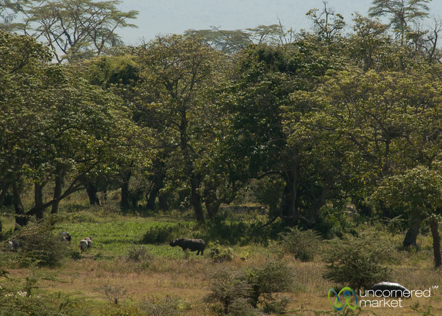 Can You Spot the Rhinoceros? Ngorongoro Crater, Tanzania