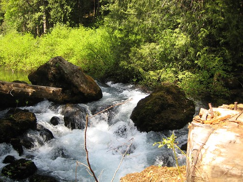 stream, trees, rocks, olympic national fore… IMG_1258