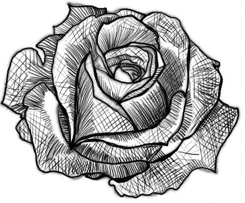 D Line Drawings Value : Rose values flickr photo sharing
