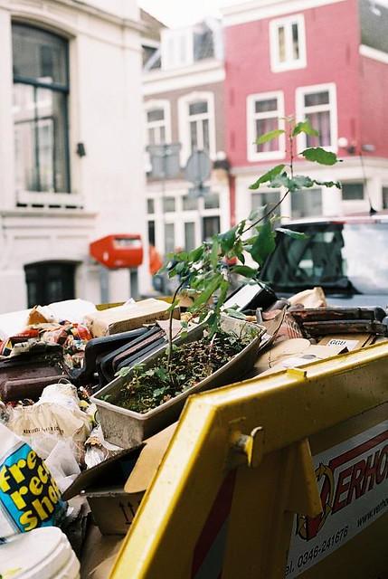 Dumped plant