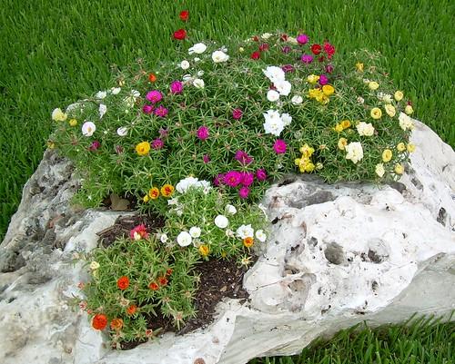 Il giardino roccioso for Rocce da giardino vendita on line