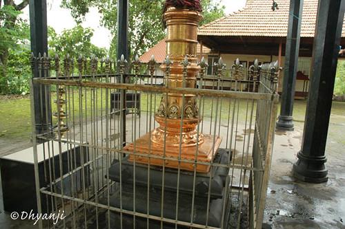 kodimaram by dhyanji