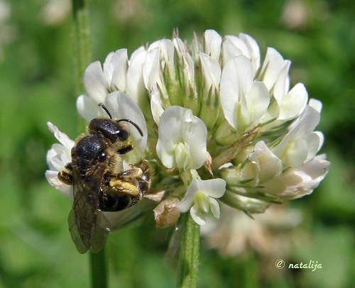 nature insect slovenia natalija blueribbonwinner narava top20flowersandbugs žuželka macromarvels npisec