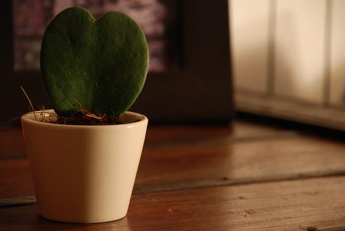 Plant Love