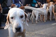 weimaraner(0.0), animal(1.0), dog(1.0), pet(1.0), street dog(1.0), mammal(1.0),