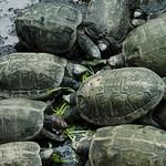 Feeding Turtles at Kek Lok Si Temple - Penang, Malaysia