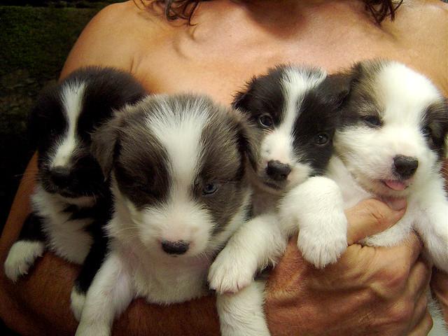 puppy pies!