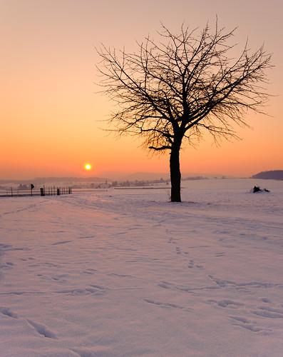 winter sunset sky orange sun snow cold tree silhouette germany deutschland nikon europe hessen bad trails explore gradient philipp hesse nauheim klinger wetterau tamron2875mmf28 supershot 11°c abigfave d700 dcdead saariysqualitypictures