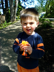 his first apricot   DSC02902