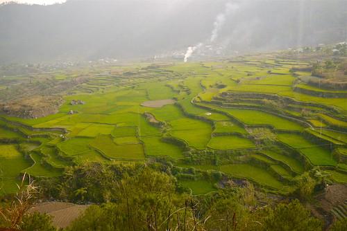 Ricefields in Sagada