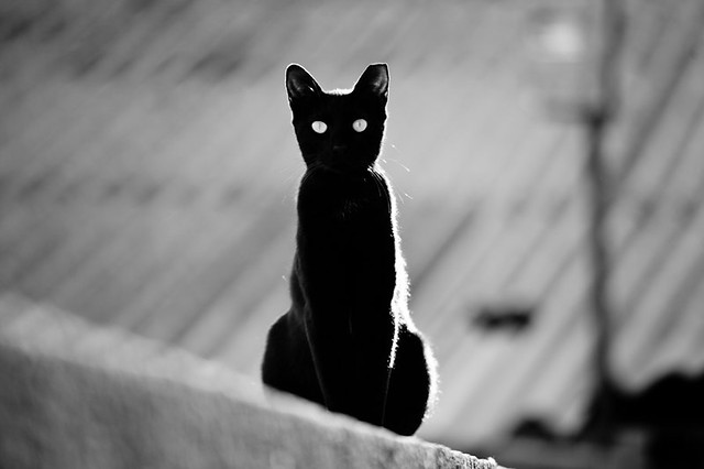 place in the sun for a black cat