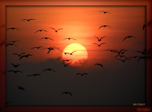 sunrise germany seagull baltic ostsee rostock picnik abigfave platinumphoto aplusphoto olympussp550uz theunforgettablepictures goldstaraward vanagram salzherz oraclex mygearandmepremium